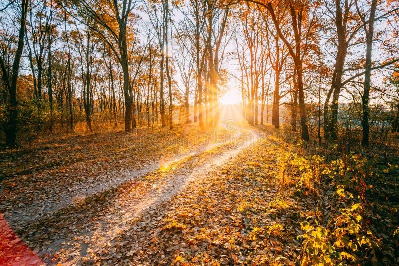 Дорожка пути дороги сельской местности замотки до лес Солнце осени стоковые изображения rf