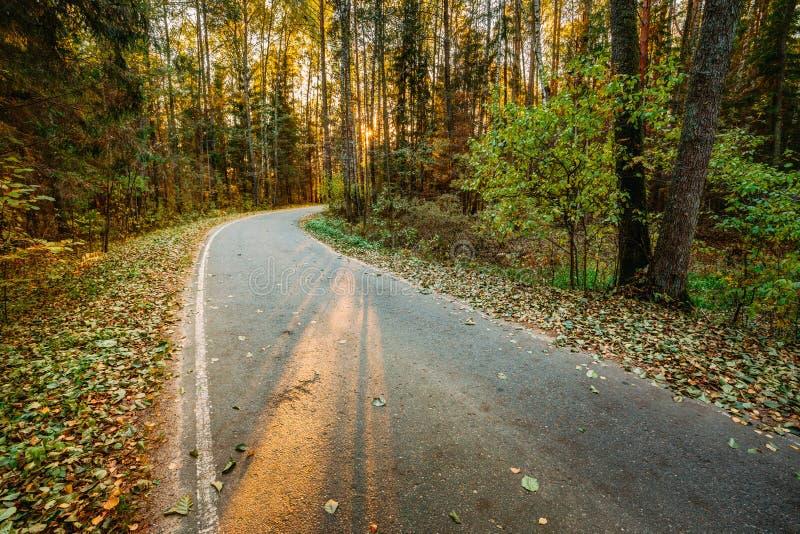 Дорожка пути дороги асфальта замотки через заход солнца леса осени стоковые фотографии rf