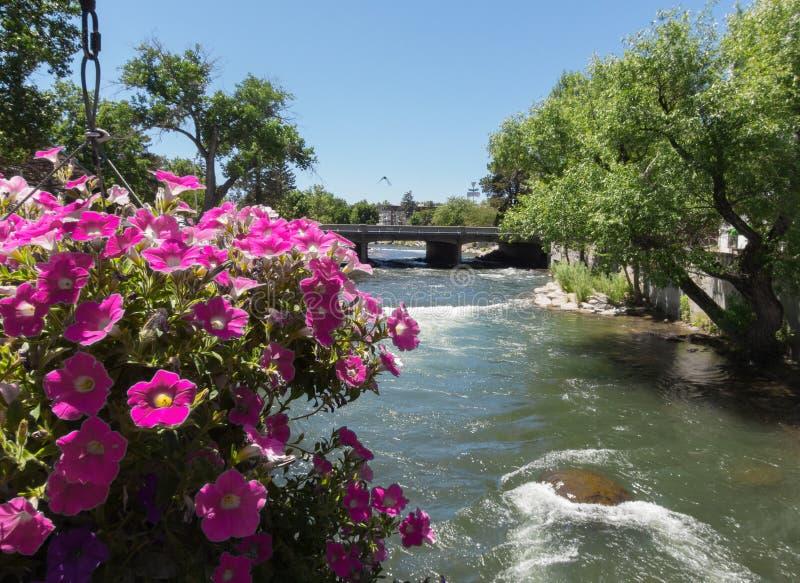 Дорожка Рекы Truckee пешеходная, Reno, Невада стоковая фотография