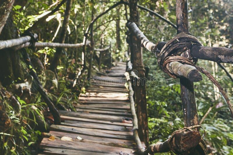 Дорожка через джунгли стоковые изображения