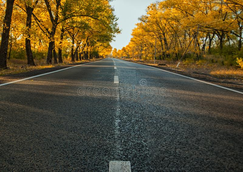 Дорожное покрытие в после полудня и деревьях осени стоковое изображение