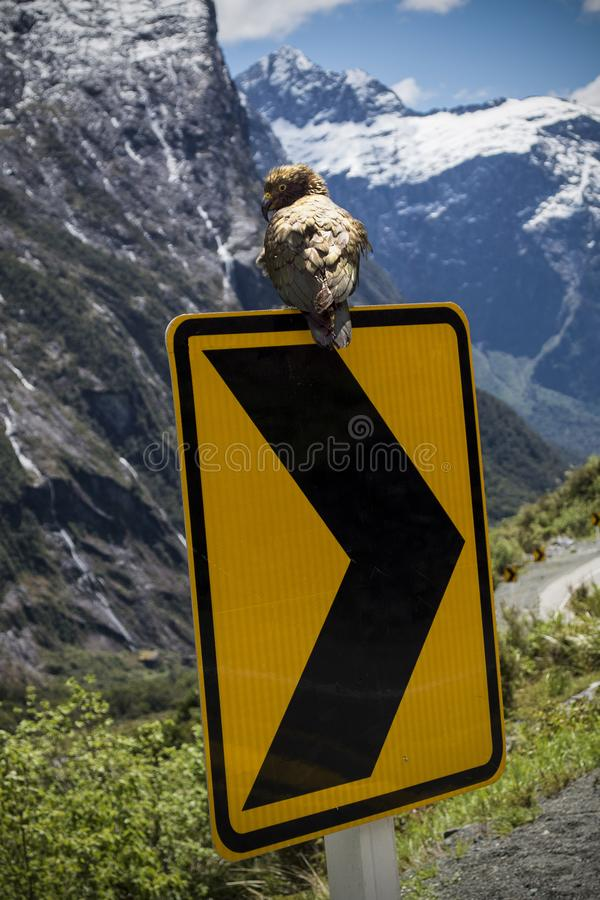 Дорожный знак попугая Kea стоковое фото rf