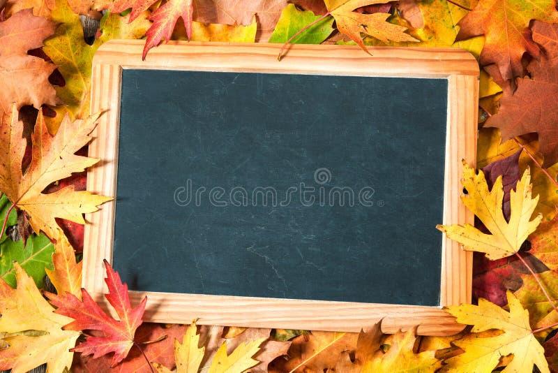 Доска на осенних листьях стоковые фото