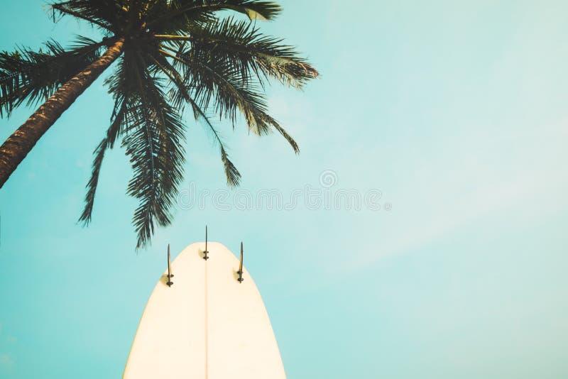 Доска прибоя с пальмой в сезоне лета стоковая фотография rf