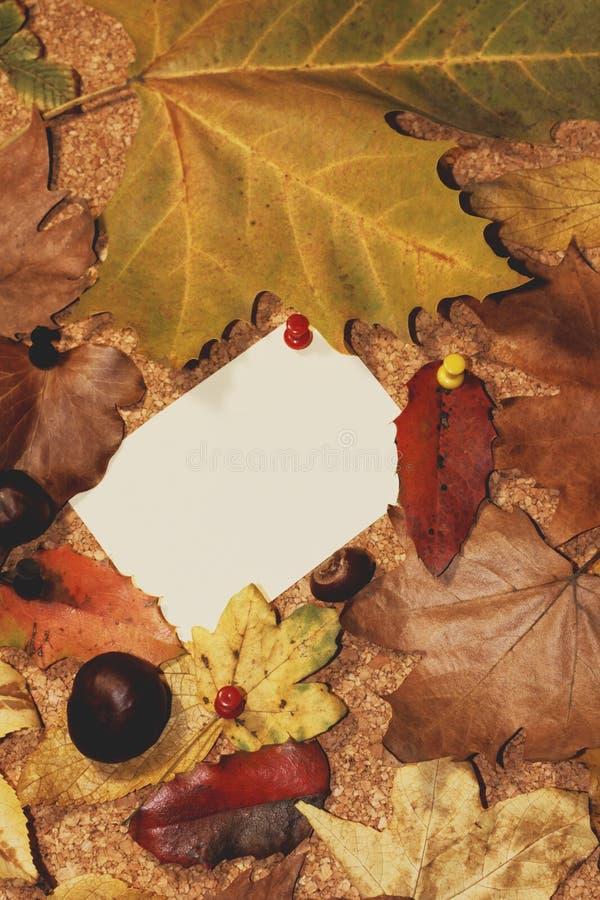 Доска для сообщений украшенная с листьями осени стоковая фотография rf