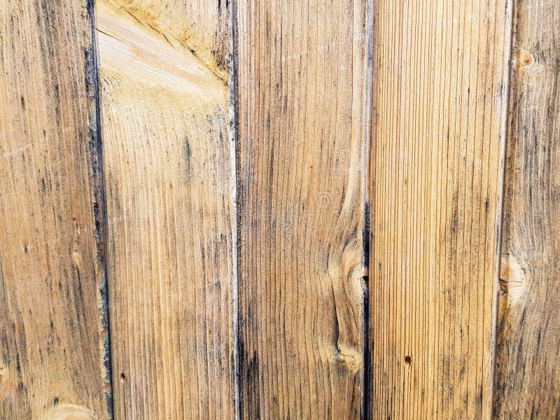 Достигший возраста текстурированный конец стены соснового леса вверх по съемке стоковое фото