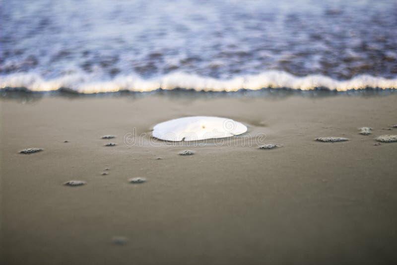 Доллар песка отдыхая на пляже стоковые изображения rf