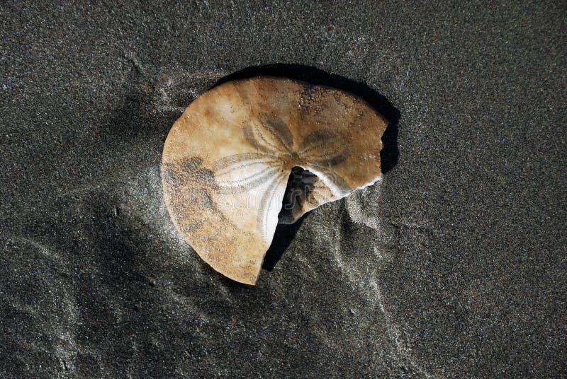 Доллар песка стоковое изображение rf