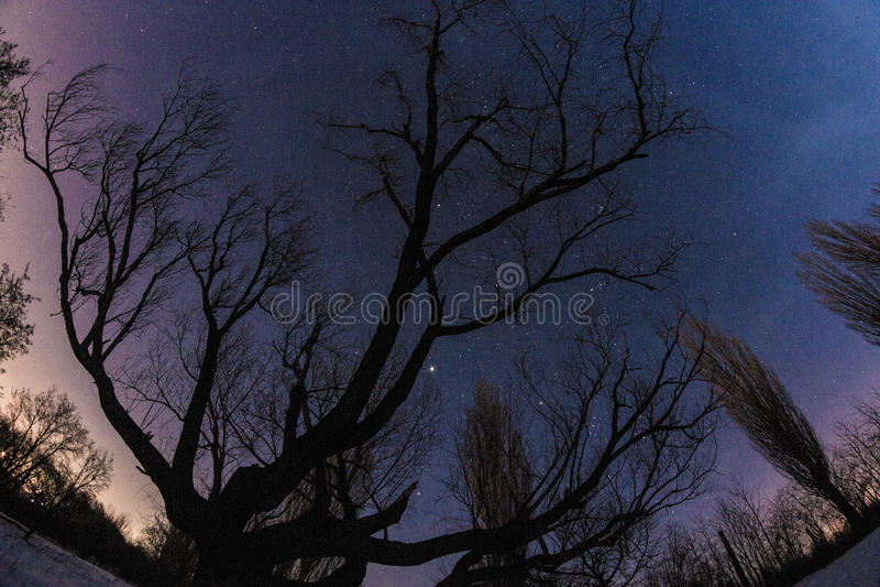 Долгая выдержка звезд стоковое изображение