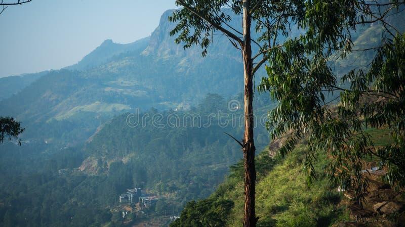 Долина горы с плантацией чая во время восхода солнца landscape естественное лето стоковые фото