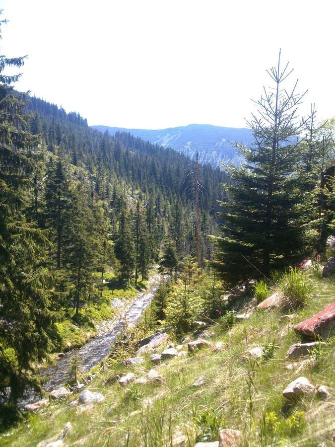 Долина горы с рекой стоковое фото rf