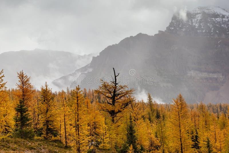 Долина лиственницы в канадских скалистых горах стоковые изображения