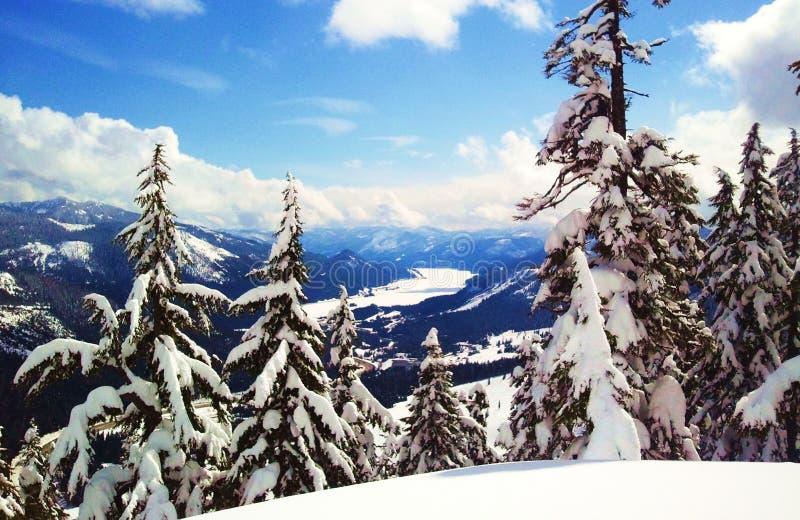 Долина озера снег замерли деревьями, который стоковые изображения