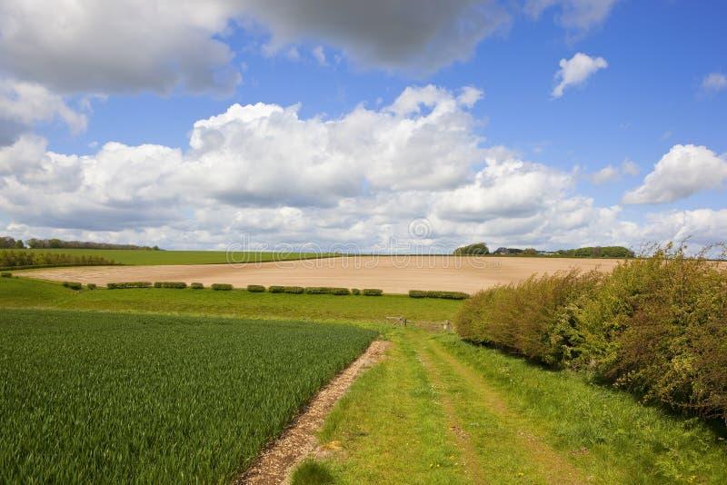 Долина пшеницы и bridleway стоковая фотография