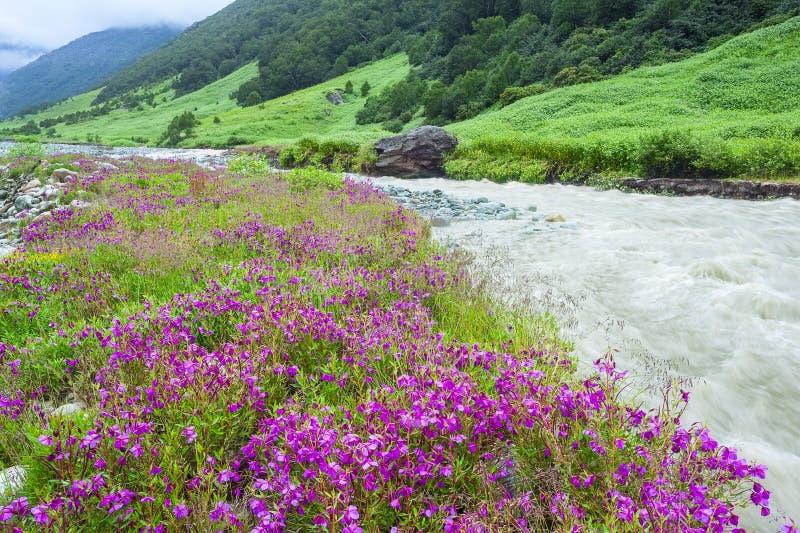 Долина цветков, Индия стоковая фотография