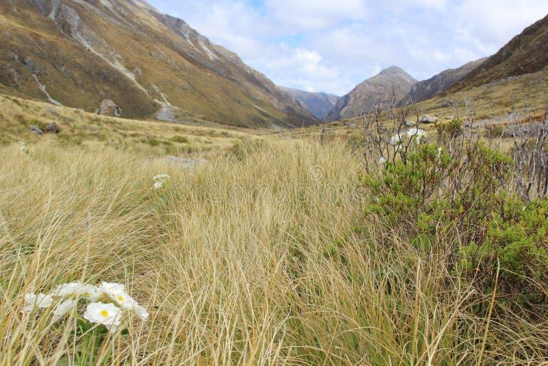 Долина Edwards, национальный парк пропуска Артура стоковая фотография rf