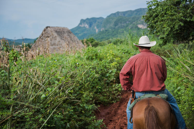 Долина Vinales, Куба - 24-ое сентября 2015: Местное кубинское coutrysi стоковые фотографии rf