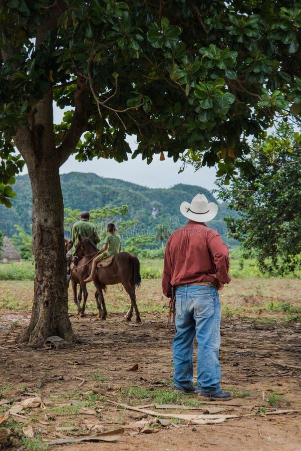 Долина Vinales, Куба - 24-ое сентября 2015: Местное кубинское coutrysi стоковая фотография rf