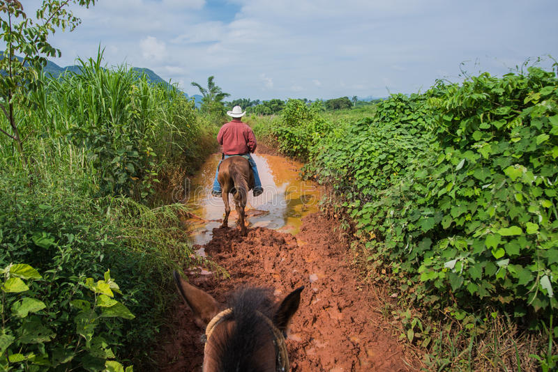 Долина Vinales, Куба - 24-ое сентября 2015: Местное кубинское coutrysi стоковое фото