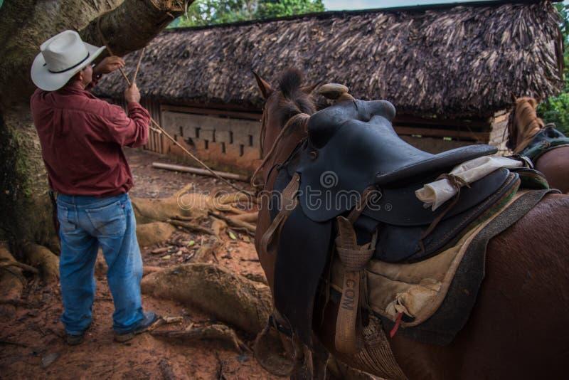 Долина Vinales, Куба - 24-ое сентября 2015: Местный ковбой подготавливает стоковая фотография