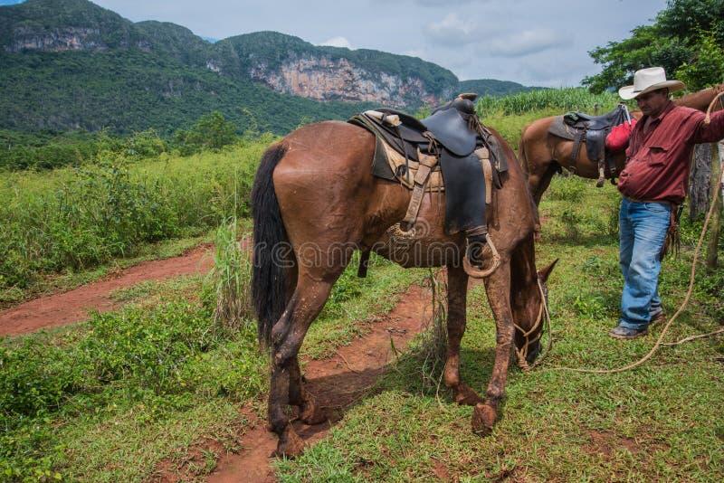 Долина Vinales, Куба - 24-ое сентября 2015: Местный ковбой подготавливает стоковая фотография rf