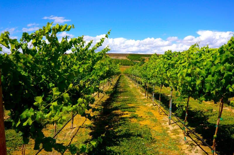 Долина Yakima винодельни стоковое фото