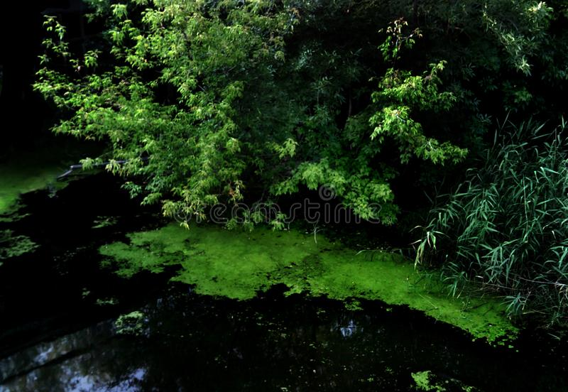 Драгоценные яркие ые-зелен деревья растут на банках реки стоковая фотография