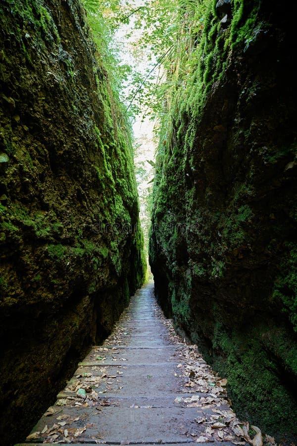 Драконовское ущелье в Тюрингском лесу около Айзенаха стоковая фотография rf