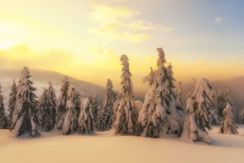 Драматическая сцена с зимними деревьями стоковая фотография rf