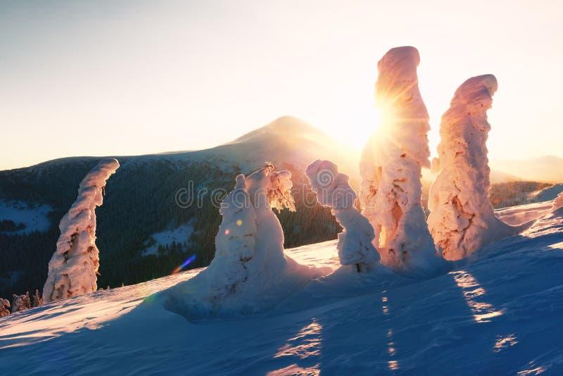 Драматическая сцена с зимними деревьями стоковое изображение