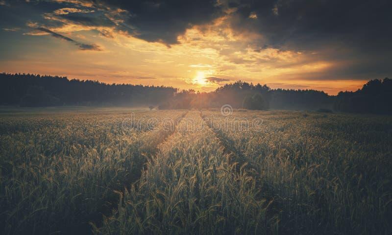 Драматические облака захода солнца над пшеничным полем лета стоковое фото