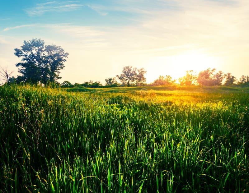 Драматический заход солнца над красивыми зелеными сельскими полями стоковая фотография