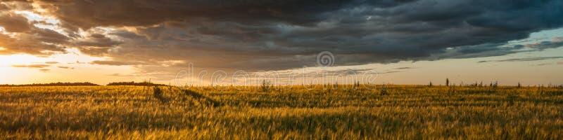 драматический заход солнца над полем лета широким аграрным в теплой погоде r стоковые изображения rf