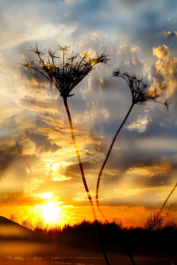 Драматический заход солнца с одичалой травой стоковая фотография rf