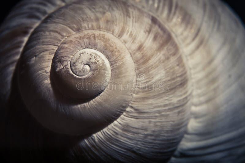 Драматический конец вверх спиральной раковины, стоковые фотографии rf