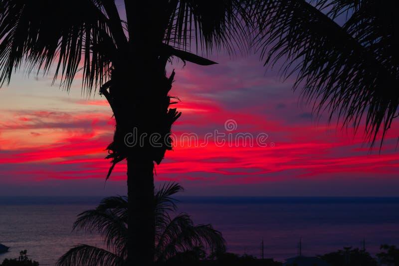 Драматический фиолетовый заход солнца над темными пальмами воды и силуэтов Seascape с облаками в сочном красном цвете излучает за стоковое фото rf