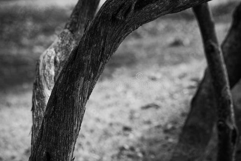 Драматический фон с монохромным стволом дерева близок, мягкий фокус стоковые фото