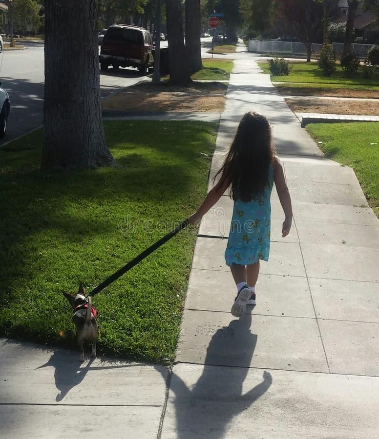 Драма собаки идя стоковые фотографии rf