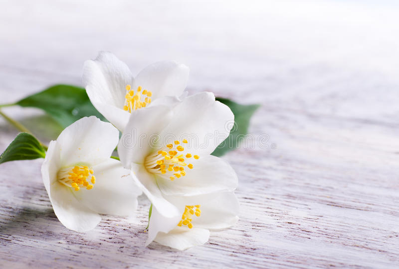 древесина белизны жасмина цветка предпосылки стоковое фото
