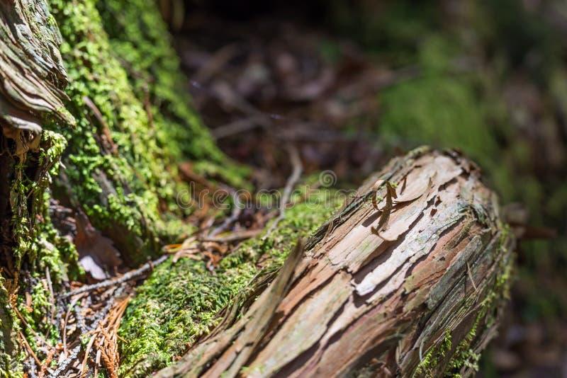 древесина в лесе суицида стоковые фото