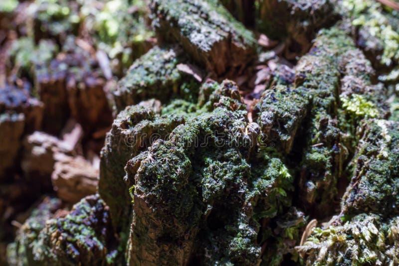 древесина в лесе суицида стоковые изображения