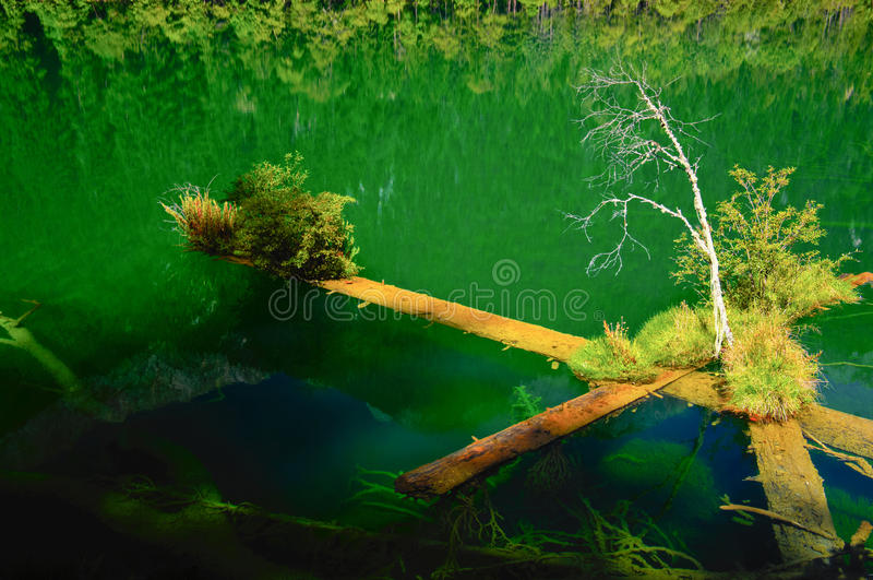 Древесина в отражении Стоковые Фото