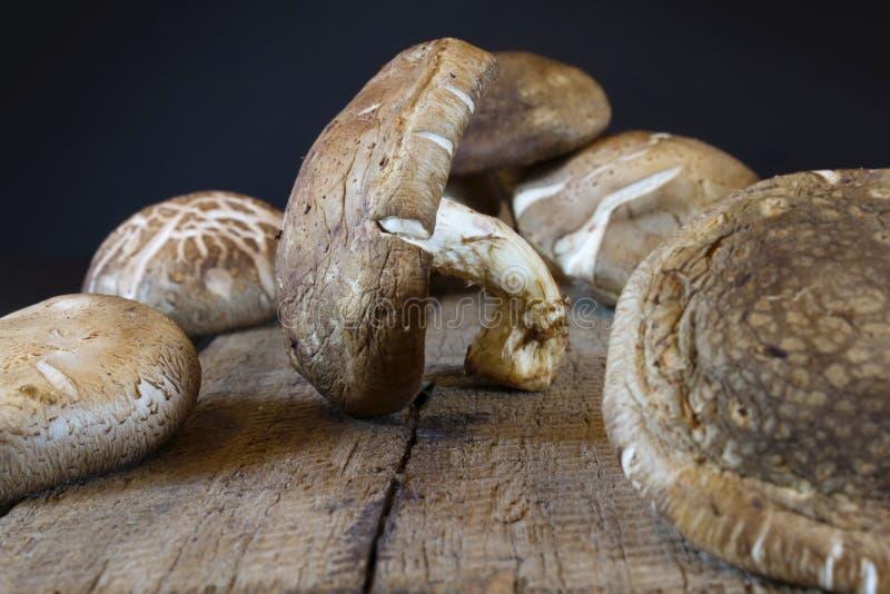 древесина гриба стоковые изображения rf