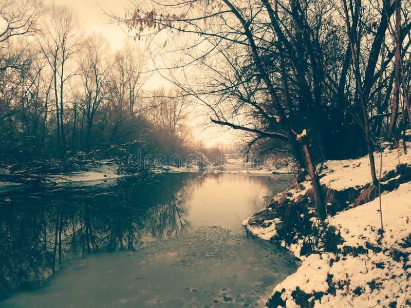 Древесина, естественная, река стоковые изображения rf