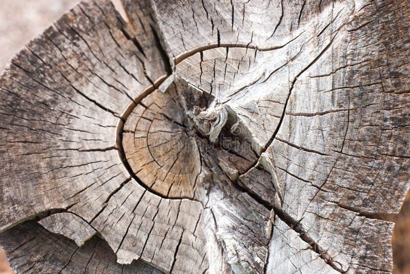 Древесина звенит текстура, треснутый деревянный отрезок стоковая фотография