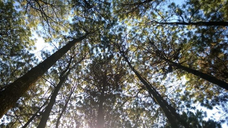 Древесина и небо стоковые фото