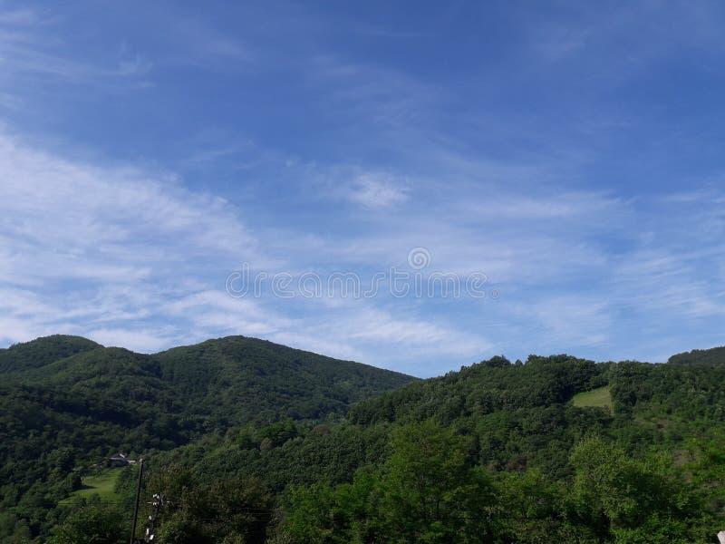 Древесина и холм стоковая фотография