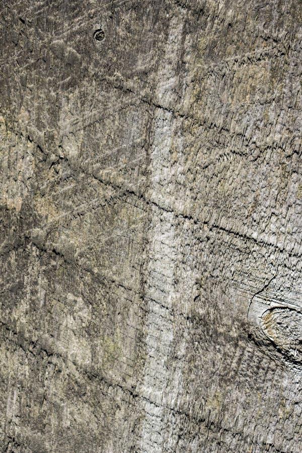 Древесина можжевельника стоковое фото