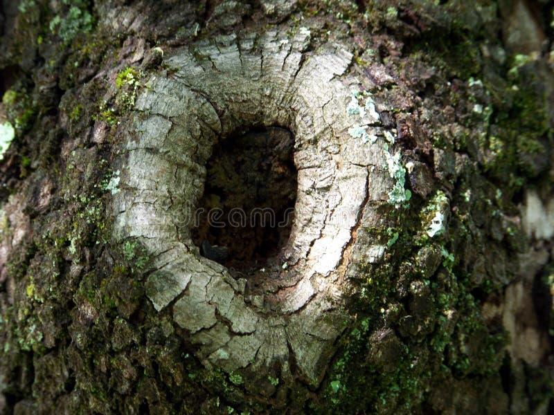 древесина отверстия стоковое фото