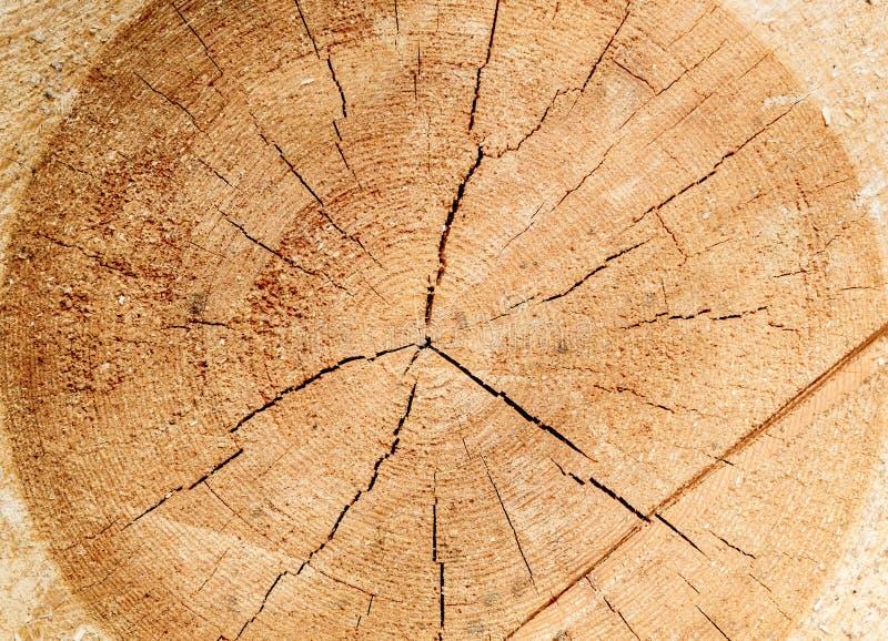 Древесина отрезка, текстура древесины стоковая фотография